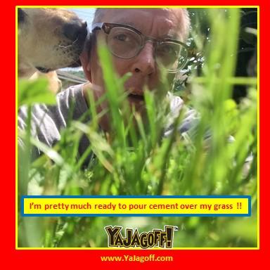 yj-grass