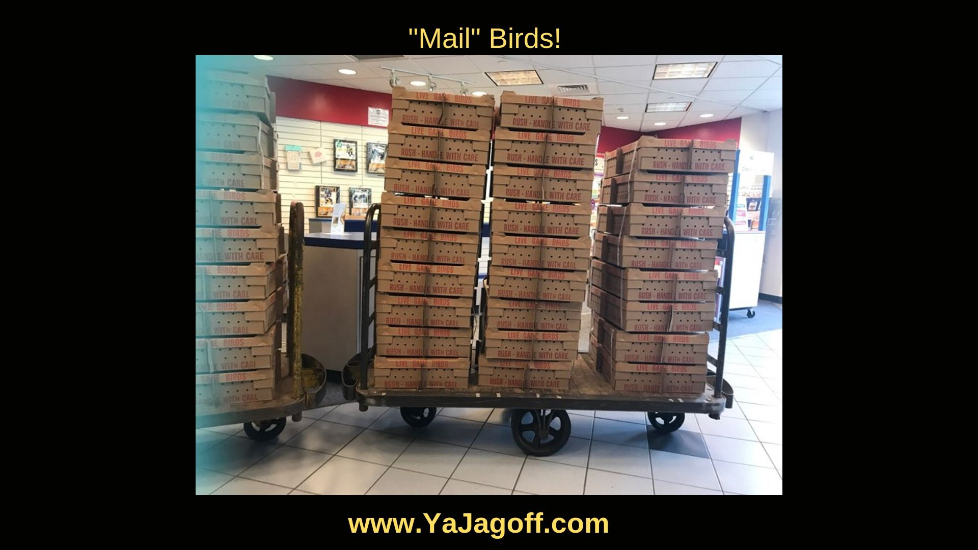 Mail Birds Jail Birds
