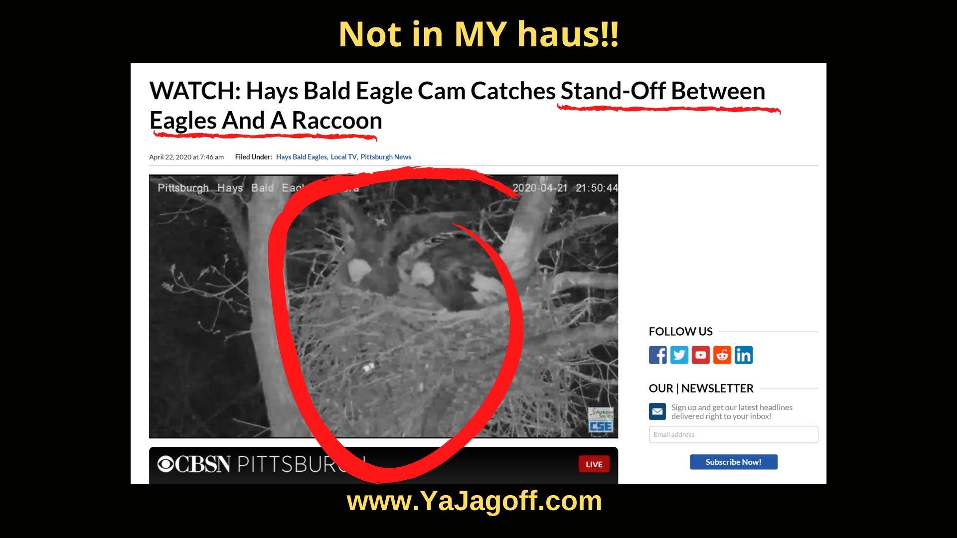 YaJagoff Eagle Nest