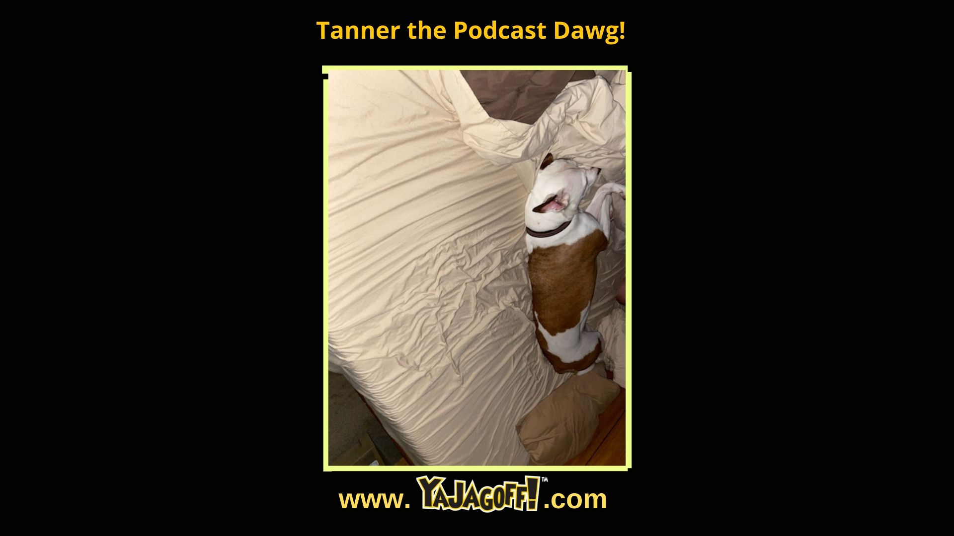 YaJagoff Blog, Tanner the Podcast Dog