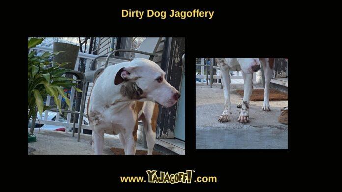 Jagoff Dog Pittsburgh Jagoff
