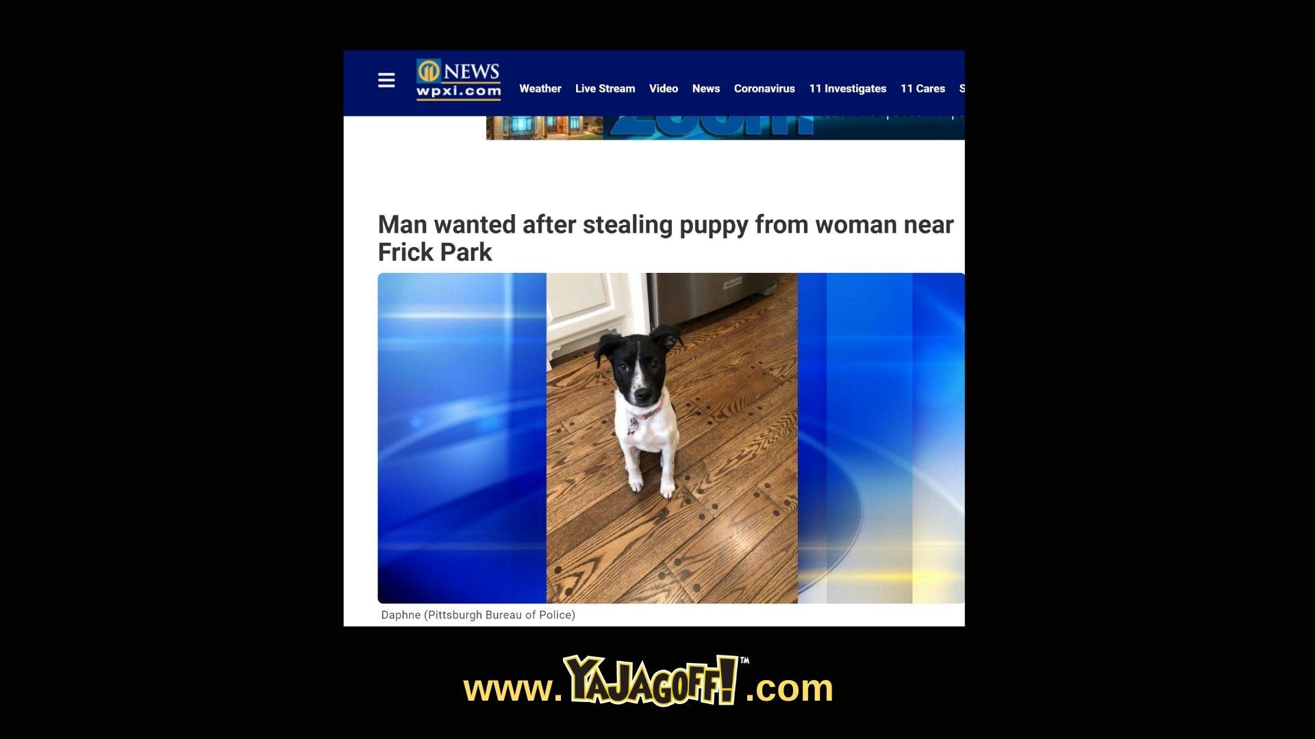 Dog Stolen Frick Park