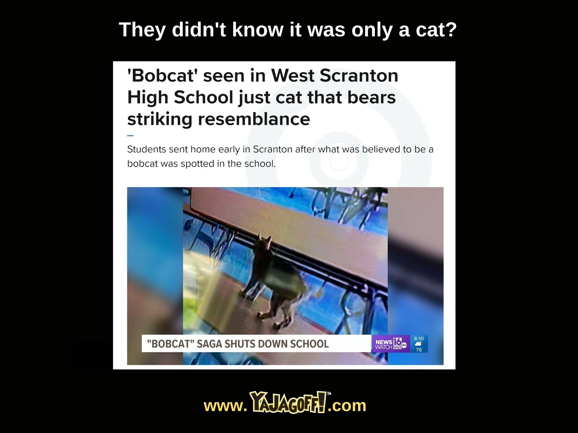 Bobcat' seen in West Scranton High School just cat